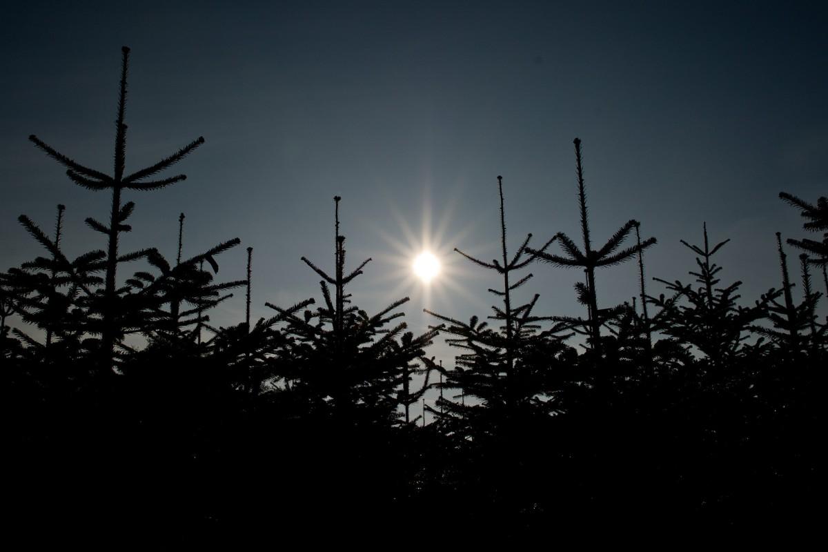 Weihnachtsbaum Selber Schlagen Sauerland.Trockenheit Setzt Weihnachtsbäumen Zu Spätere Auswirkungen Wr De