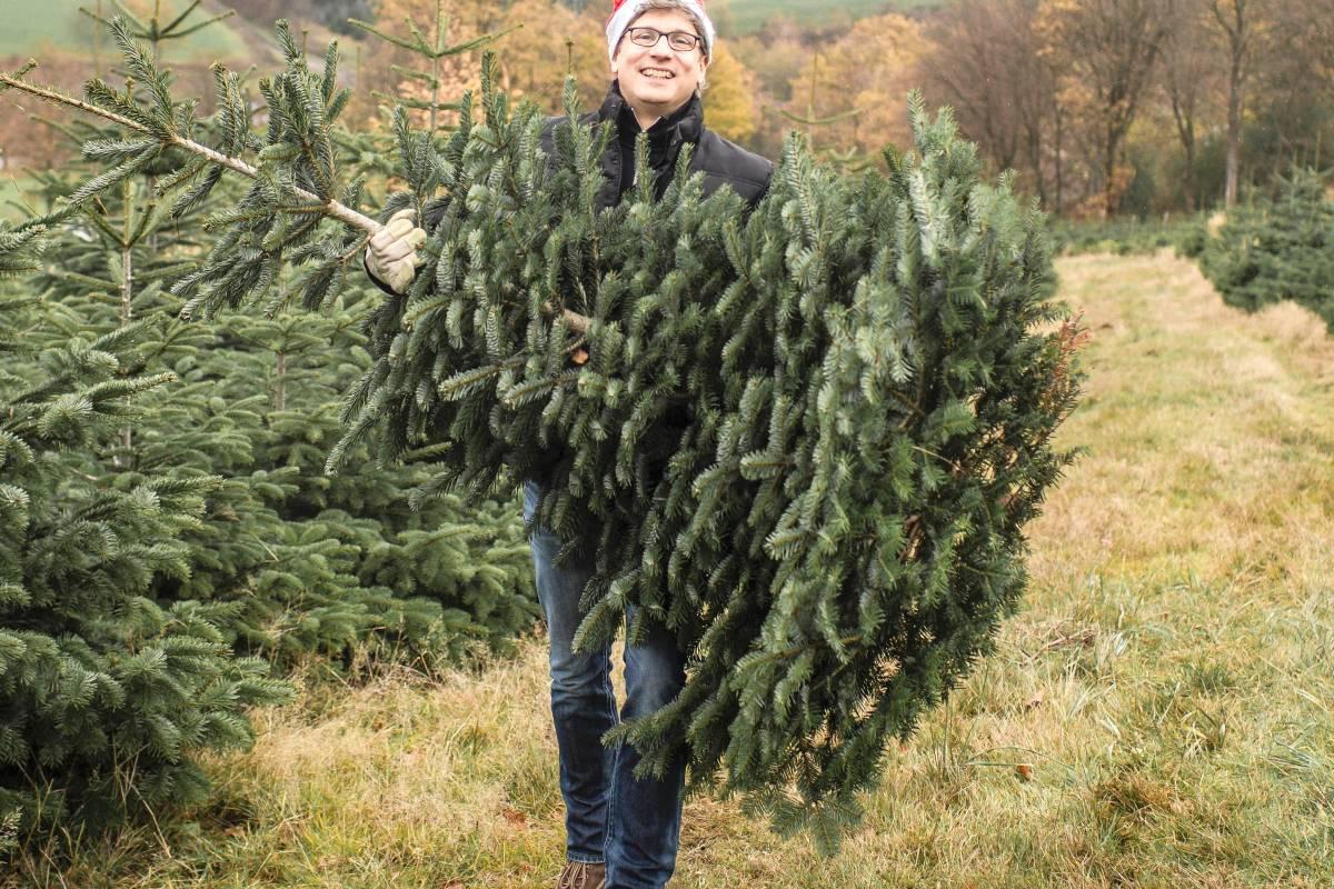Weihnachtsbaum Selber Schlagen Sauerland.Der Traum Vom Selbst Geschlagenem Weihnachtsbaum Wr De Kultur