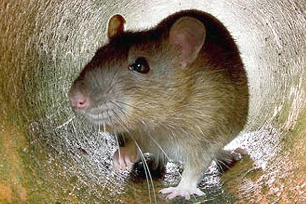 Ratten Schmeissfliegen Mull Das Ekel Haus In Oberhausen