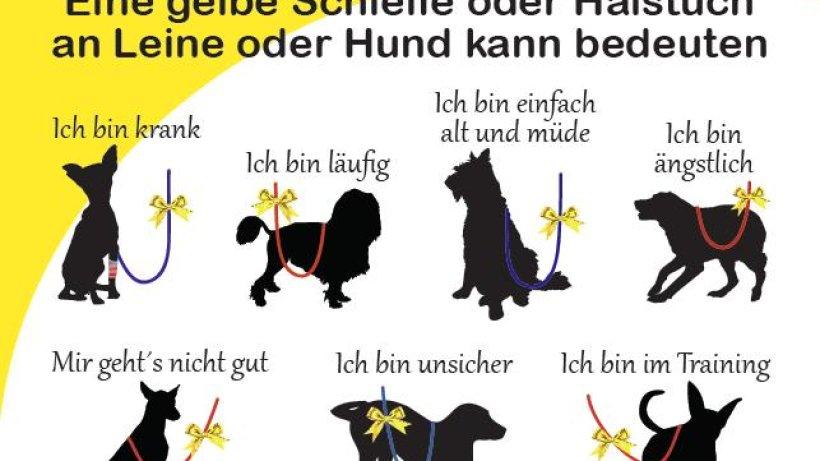 gula hund gelbe schleife gegen unerw nschten tier kontakt nachrichten aus dortmund der. Black Bedroom Furniture Sets. Home Design Ideas