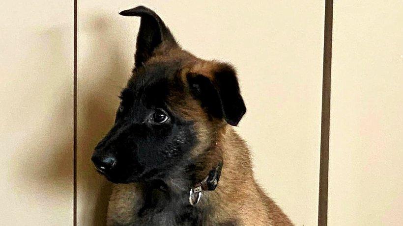 Hagen: Neuer Diensthund für die Polizei geht in die Lehre