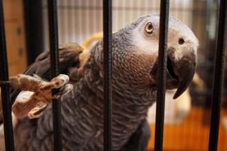 staedtedortmundneue papageien im cafe